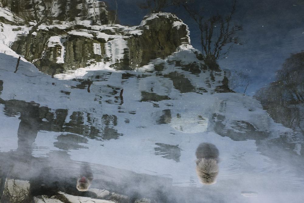 snowmonkeys-006.jpg