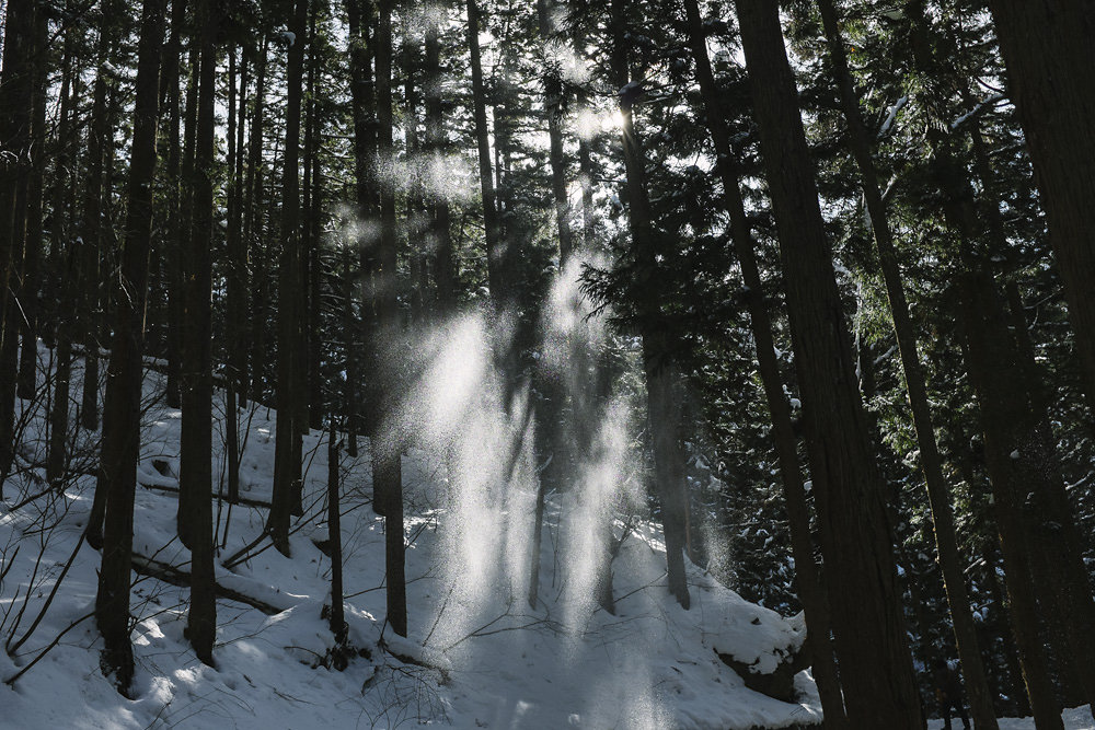 snowmonkeys-009.jpg