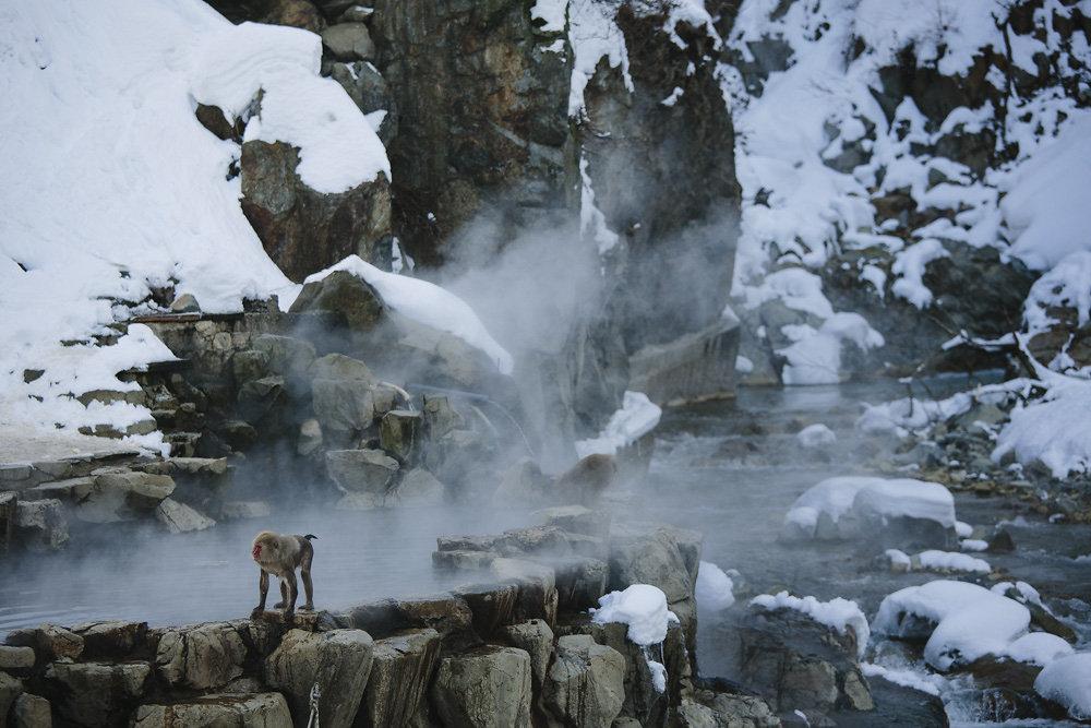 snowmonkeys-011.jpg